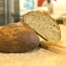 WHOLE WHEAT PAGNOTTA